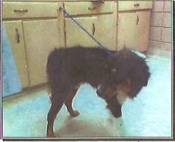 Cooper book mug, Eastside Animal Shelter, August 2006