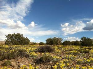 yellow mesa