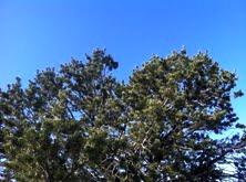 Tree, sky 1