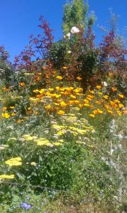 winflowers2