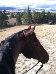 horsebacktext