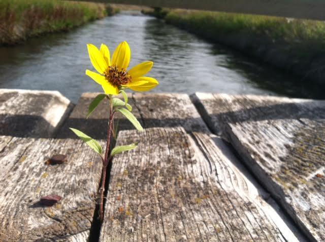 hopeflower
