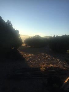 morningwoodpile